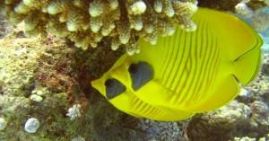 unterwasser610-320